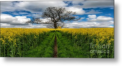 Field Of Rapeseeds Metal Print by Adrian Evans