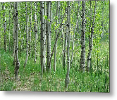 Field Of Teens Metal Print by Donna Blackhall