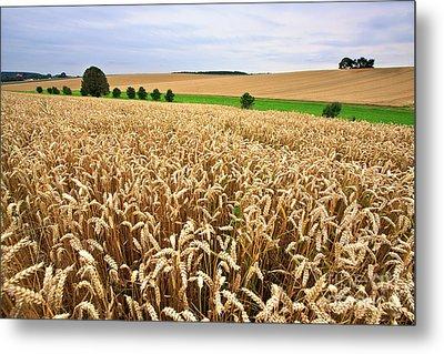 Field Of Wheat Metal Print by Nailia Schwarz