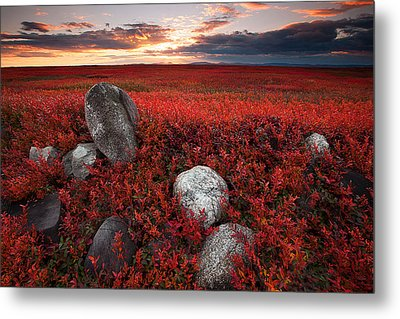 Fields Of Autumn Metal Print by Patrick Downey