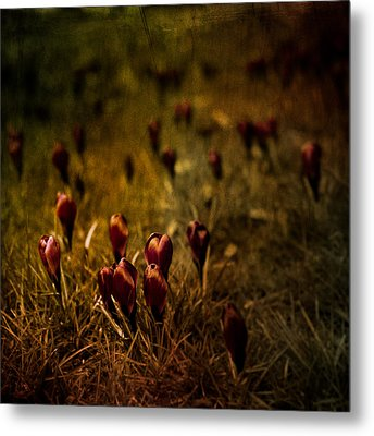 Fields Of Elegance Metal Print by Loriental Photography