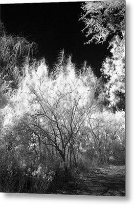 Fierce Tree Metal Print