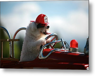 Fifi Saves The Day Metal Print by Michael Ledray