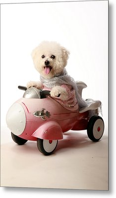 Fifi The Bichon Frise And Her Rocket Car Metal Print by Michael Ledray