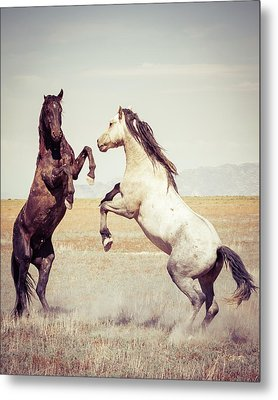 Metal Print featuring the photograph Fighting Stallions by Mary Hone