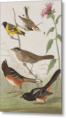 Finches Metal Print by John James Audubon