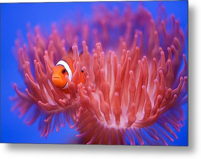Finding Nemo Metal Print by Wendy