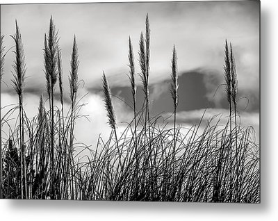 Fine Art Black And White-188 Metal Print