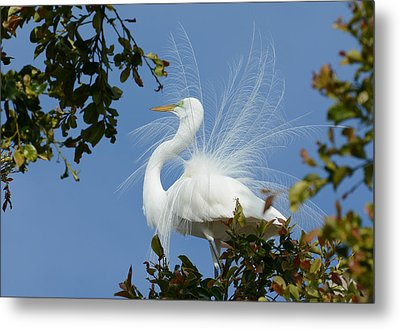Metal Print featuring the photograph Finery by Fraida Gutovich