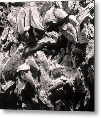 Metal Print featuring the photograph Fingers Of Time - Giant Oyster Shell Fossils by Menega Sabidussi