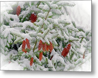 Metal Print featuring the photograph Fir Cones On White Photo Art by Sharon Talson