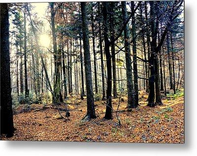 Fir Forest-3 Metal Print