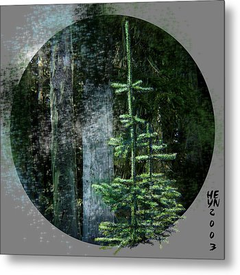 Fir Trees - 3 Ages Metal Print by Shirley Heyn