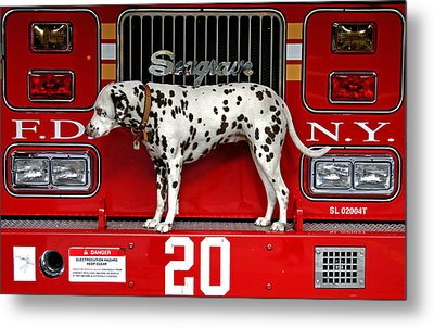Fire Dog Metal Print by Bryan Hochman