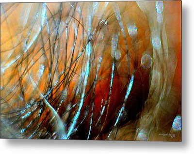 Fire In The Wind Metal Print by JCYoung MacroXscape