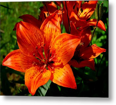 Metal Print featuring the photograph Fire Lilies by Marilynne Bull