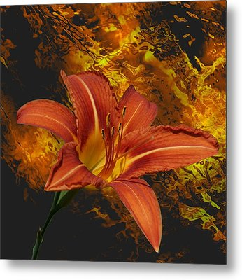 Fire Lilly Metal Print by Rick Friedle