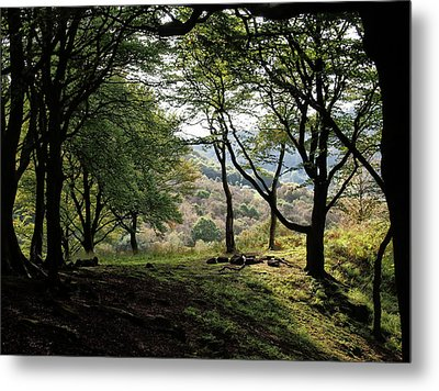 Woodland - Fire Pit And Trees Metal Print by Philip Openshaw