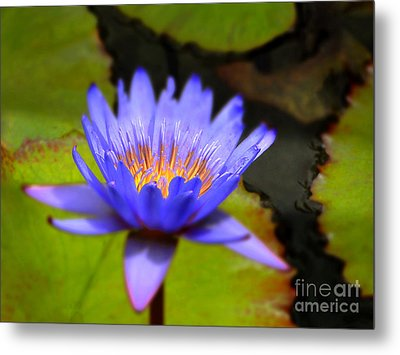 Fire Within Metal Print by Sue Melvin