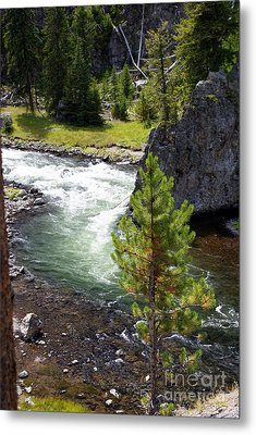 Firehole Fin Metal Print by Marty Koch