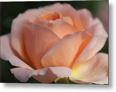 Fireside Metal Print by Connie Handscomb