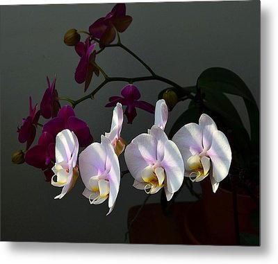 First Light Metal Print by Kathy Eickenberg