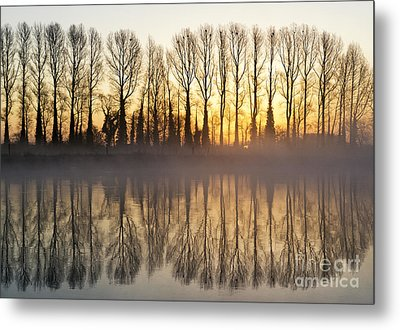 First Misty Light Metal Print by Tim Gainey