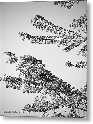 First Signs Of Spring II Metal Print by DigiArt Diaries by Vicky B Fuller