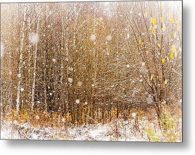 First Snow. Snow Flakes I Metal Print by Jenny Rainbow