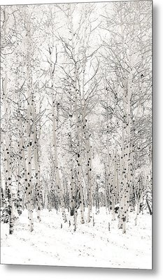 First Snow Metal Print by The Forests Edge Photography - Diane Sandoval