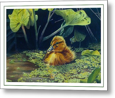 Metal Print featuring the painting First Spring - Mallard Duckling by Bob Nolin