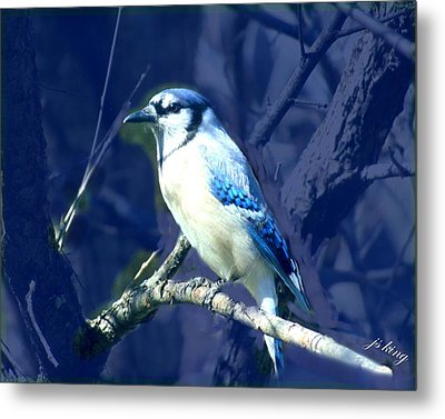 First Spring Bluejay Metal Print by Jacquie King