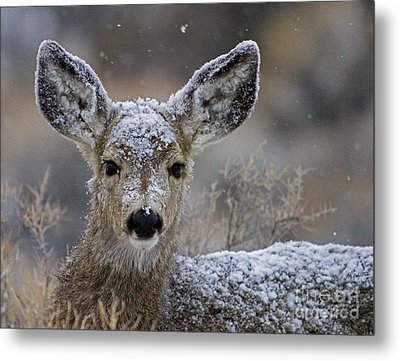 First Winter-signed Metal Print