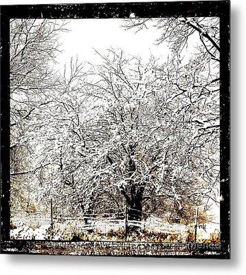 First Winter Snow Metal Print by Marsha Heiken