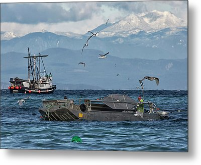 Metal Print featuring the photograph Fish Are Flying by Randy Hall