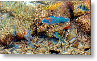 Fish Metal Print by Betty Buller Whitehead