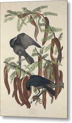 Fish Crow Metal Print