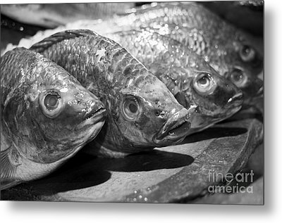 Metal Print featuring the photograph Fish by Dean Harte