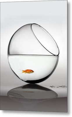 Fish In Fish Bowl Stressed In Danger Metal Print by Paul Strowger