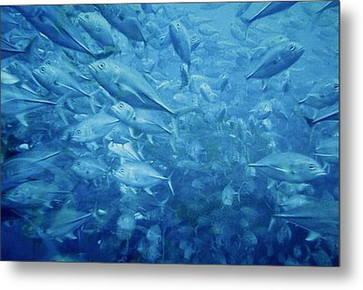 Fish Schooling Harmonious Patterns Throughout The Sea Metal Print by Christine Till