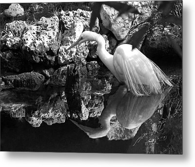 Fishing In The Creek In Black And White Metal Print by Judy Wanamaker