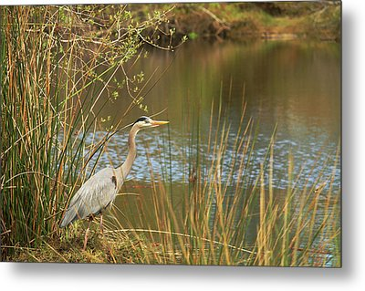 Metal Print featuring the photograph Fishing Oceano Lagoon by Art Block Collections