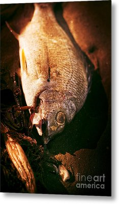 Fishy Find Metal Print by Jorgo Photography - Wall Art Gallery