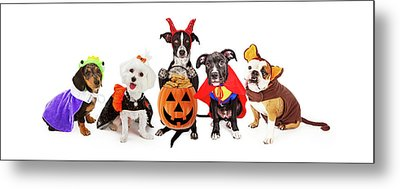 Five Dogs Wearing Halloween Costumes Banner Metal Print