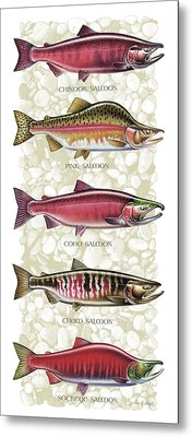 Five Salmon Species  Metal Print by JQ Licensing