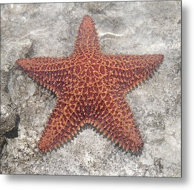Five Star Fish Metal Print