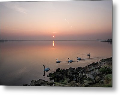 Five Swans At Dawn Metal Print by Martina Fagan