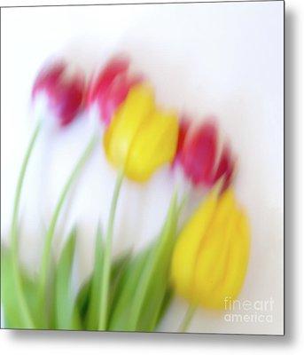 Five Tulips Metal Print by Janet Burdon