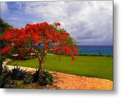 Flamboyant Tree In Grand Cayman Metal Print by Marie Hicks