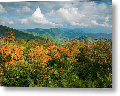 Flame Azaleas Roan Highlands Appalachian Trail Metal Print